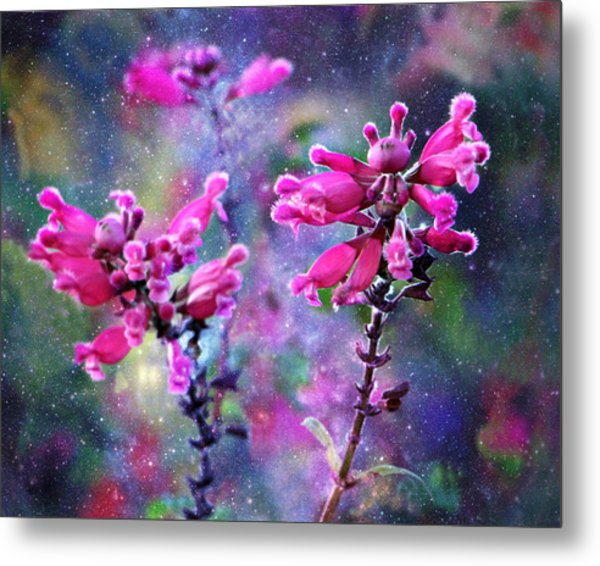 Celestial Blooms-2 Metal Print