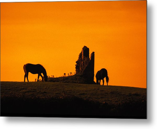Celtic Horses At Sunset Metal Print by Carl Purcell