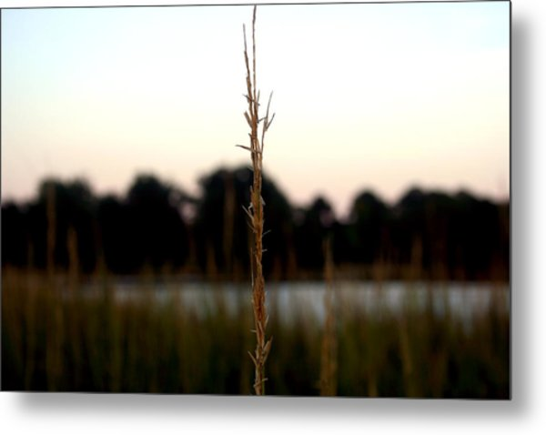 Center Of Attention Metal Print by Alexandra Harrell