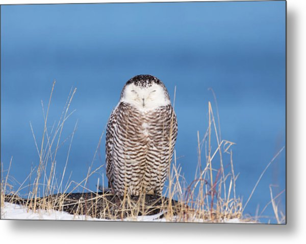 Centered Snowy Owl Metal Print