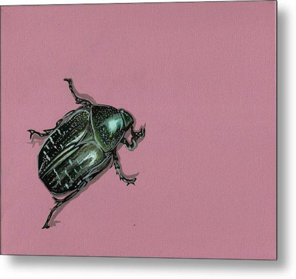 Chaf Beetle Metal Print