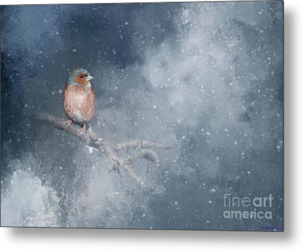 Chaffinch On A Cold Winter Day Metal Print