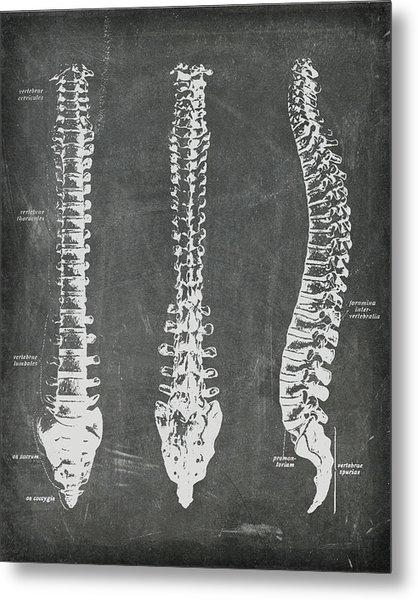 Chalkboard Anatomical Spines Metal Print