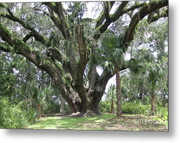 Champion Live Oak Lake Griffin Metal Print by Dodie Ulery
