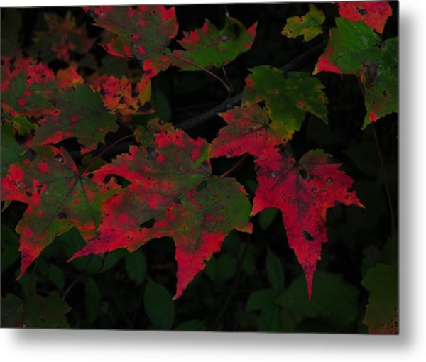 Changing Color Metal Print by JAMART Photography