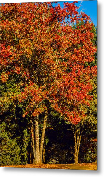 Changing Colors Of Autumn Metal Print by Barry Jones