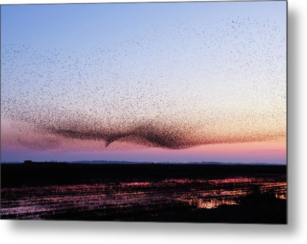 Chaos In Motion - Bird Of Many Birds Metal Print