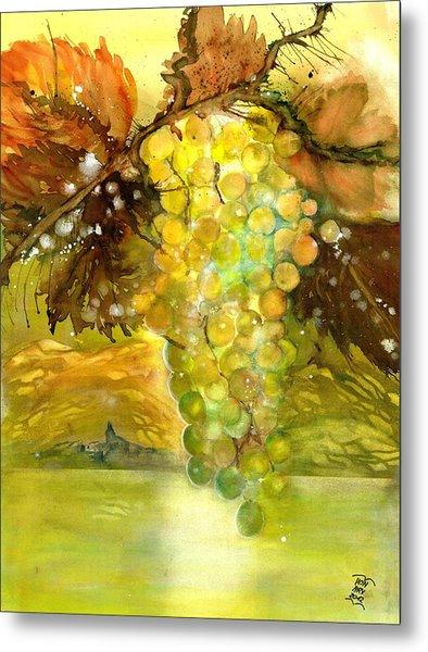 Chardonnay Grapes In Sunlight Metal Print
