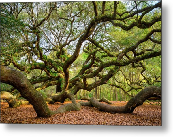 Charleston Sc Angel Oak Tree South Carolina Landscape Metal Print