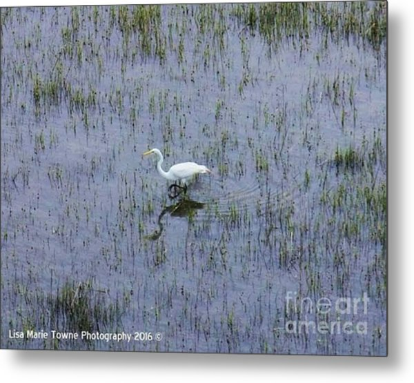 Charleston Wildlife 1 Metal Print