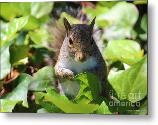 Charleston Wildlife. Squirrel Metal Print
