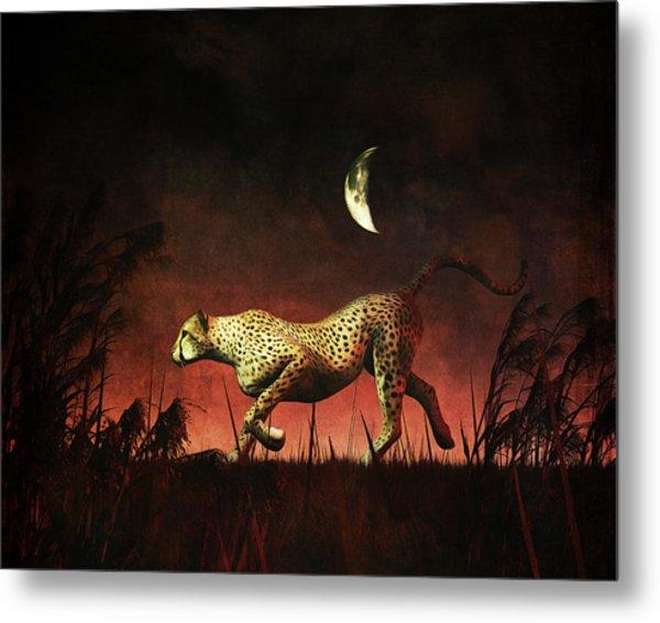 Cheetah Hunting During The African Night Metal Print