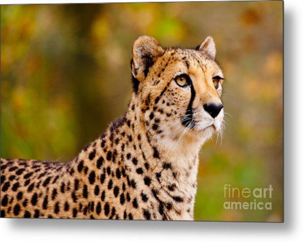 Cheetah In A Forest Metal Print