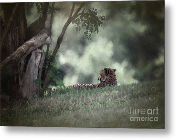 Cheetah On Watch Metal Print