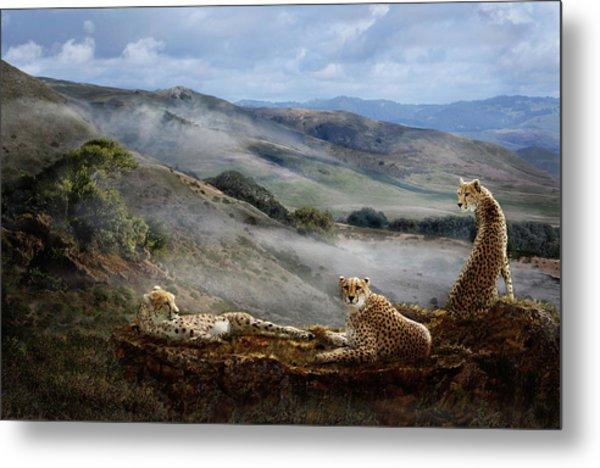 Cheetah Ridge Metal Print
