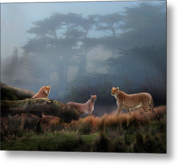 Cheetahs In The Mist Metal Print