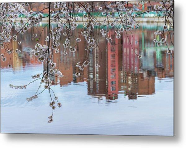 Cherry Blossom Reflections Metal Print