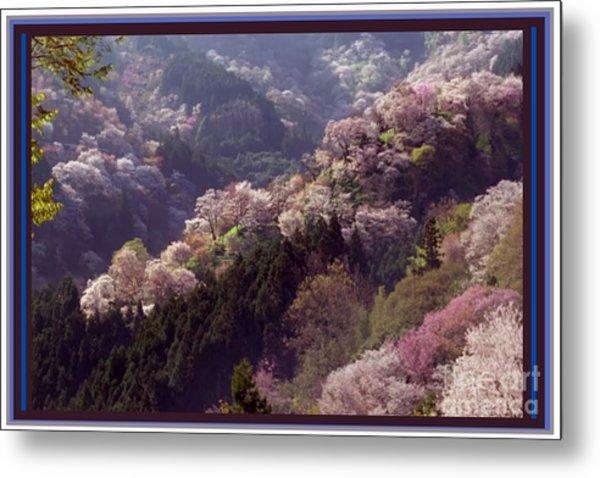 Cherry Blossom Season In Japan Metal Print