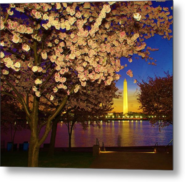 Cherry Blossom Washington Monument Metal Print