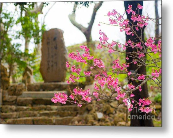 Cherry Blossoms 11 Metal Print