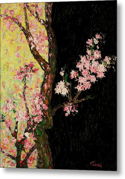 Cherry Blossoms 3 Metal Print by Timothy Clayton