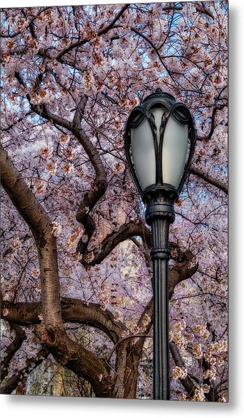 Metal Print featuring the photograph Cherry Blossoms At Central Park Nyc by Susan Candelario