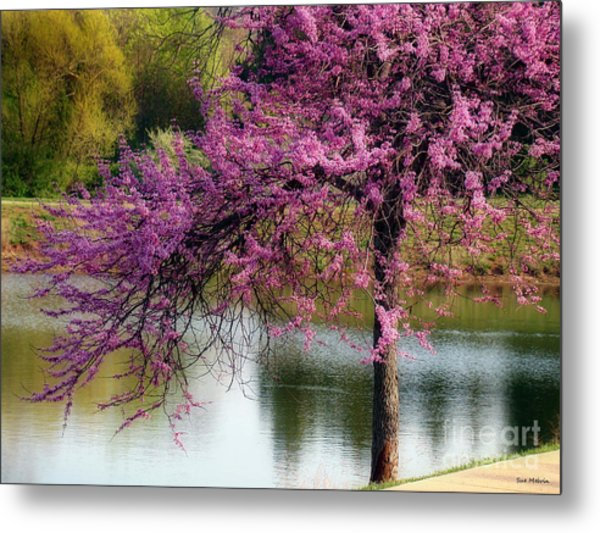 Cherry Blossoms By The Pond Metal Print