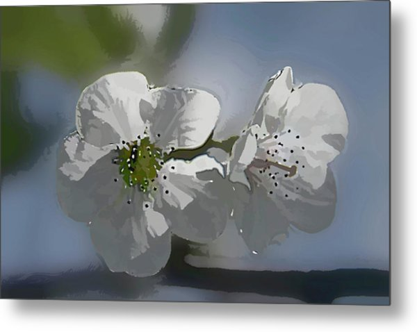 Cherry Blossoms Metal Print by Marti Buckely