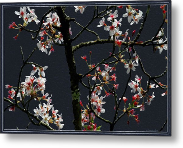 Cherry Blossoms On Dark Bkgrd Metal Print