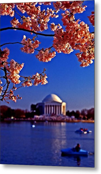 Cherry Blossoms On The Tidal Basin Metal Print