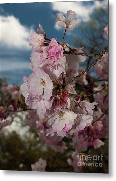 Cherry Blossoms Vertical Metal Print