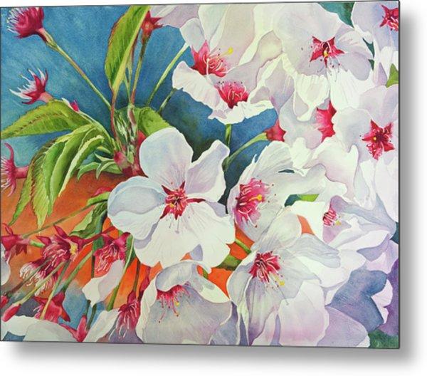 Cherry Blossomsa Metal Print