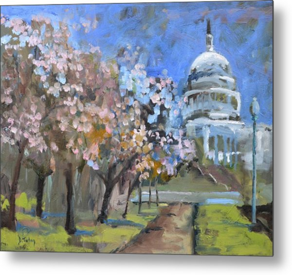 Cherry Tree Blossoms In Washington Dc Metal Print