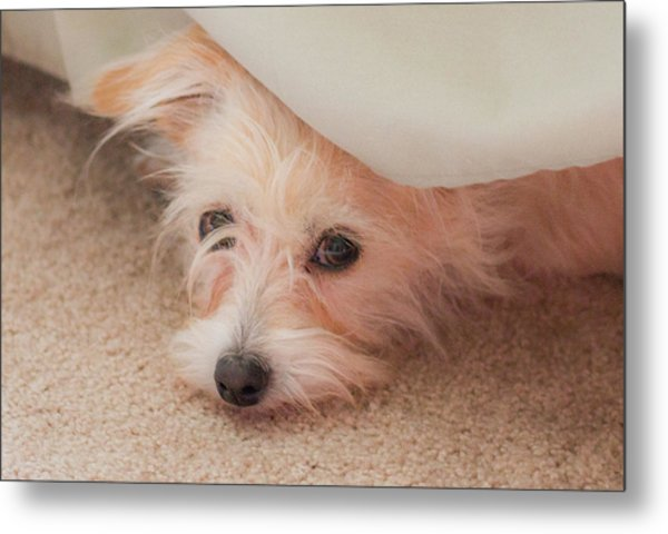 Chica In Hiding Metal Print
