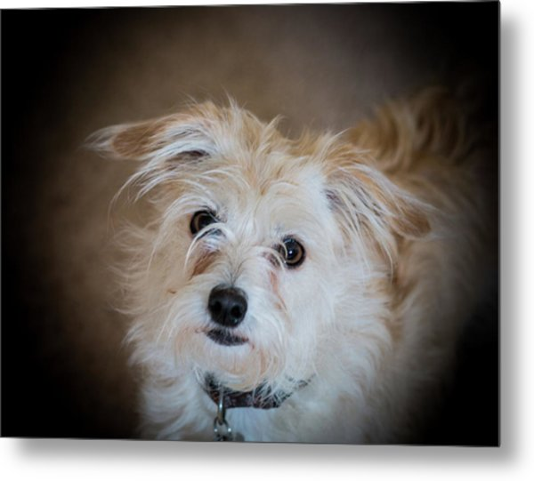 Chica On The Alert Metal Print