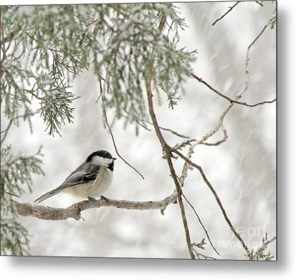 Chicadee In A Snow Storm  Metal Print