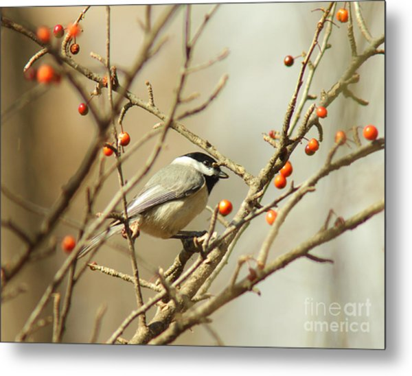 Chickadee 2 Of 2 Metal Print