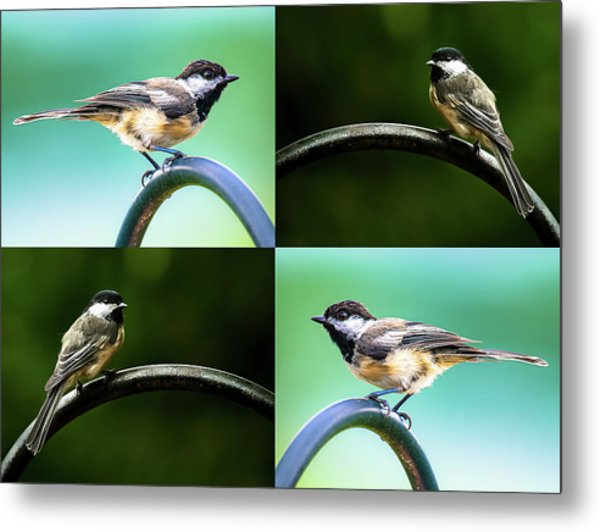 Metal Print featuring the photograph Chickadee Duo Composite by Onyonet  Photo Studios