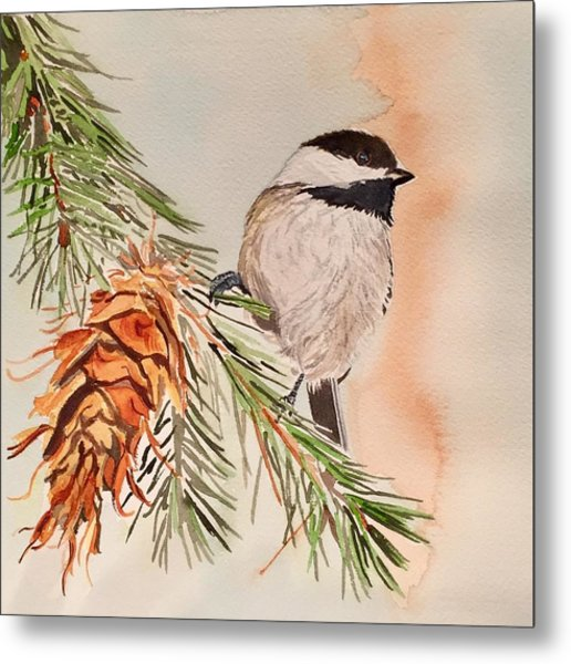 Chickadee In The Pine Metal Print