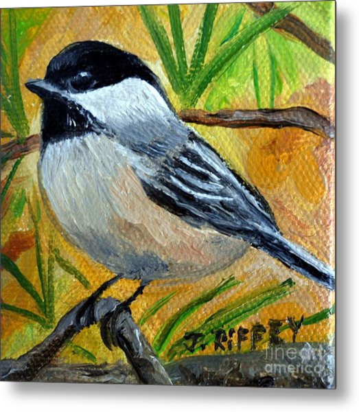 Chickadee In The Pines - Birds Metal Print