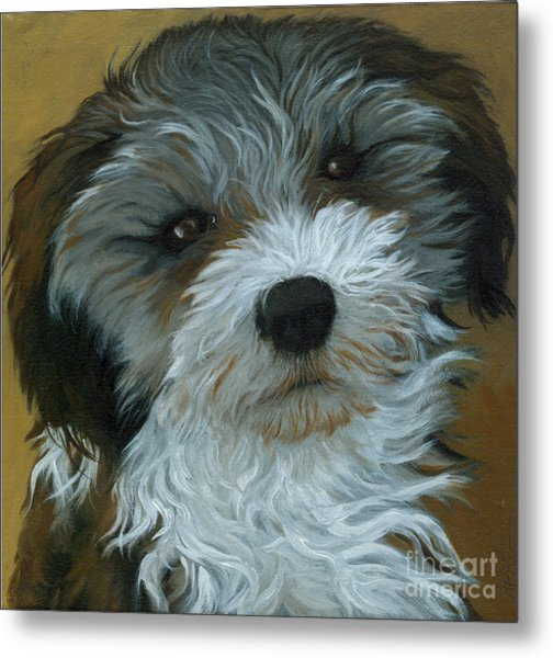 Chico - Dog Portrait Oil Painting Metal Print by Linda Apple