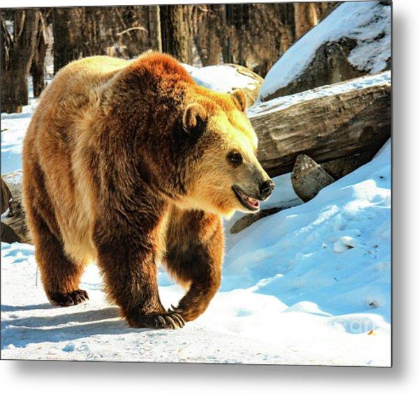Chief Walking Bear Metal Print