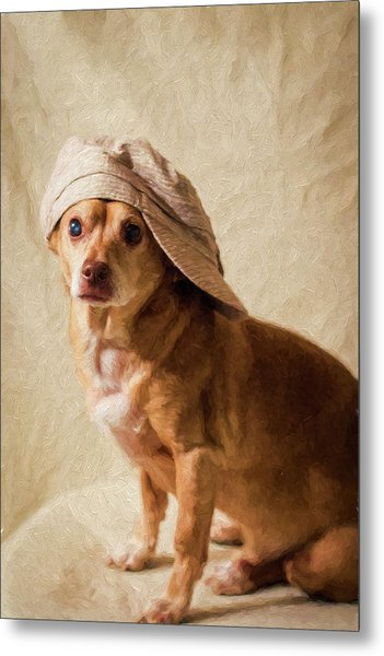Chihuahua In A Newsboy Hat Metal Print
