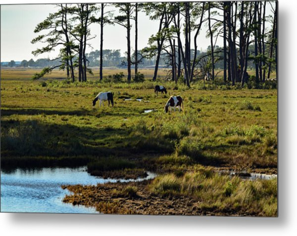Chincoteague Ponies Metal Print