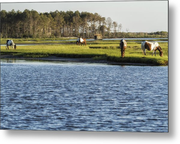 Chincoteague Ponies On Assateague Island Metal Print