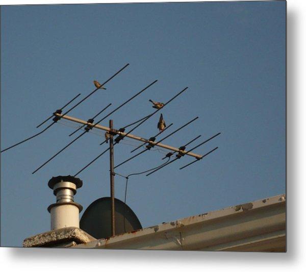 Chirping Antenna Metal Print by Stephen Davis