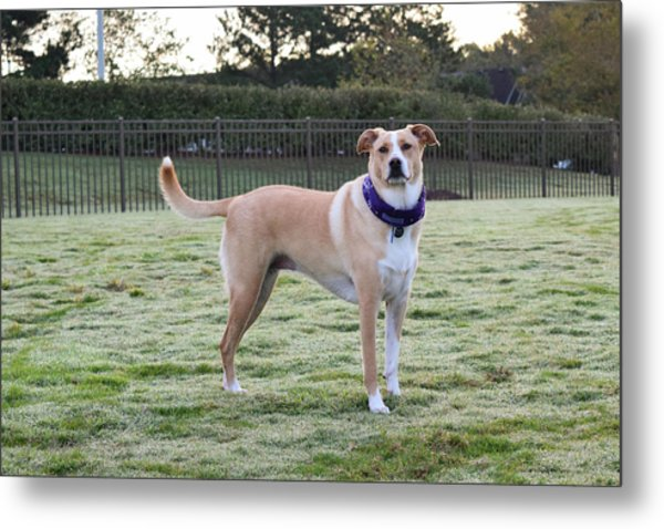 Chloe At The Dog Park Metal Print