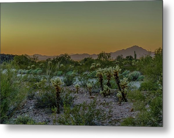 Cholla Desert Sunset Metal Print