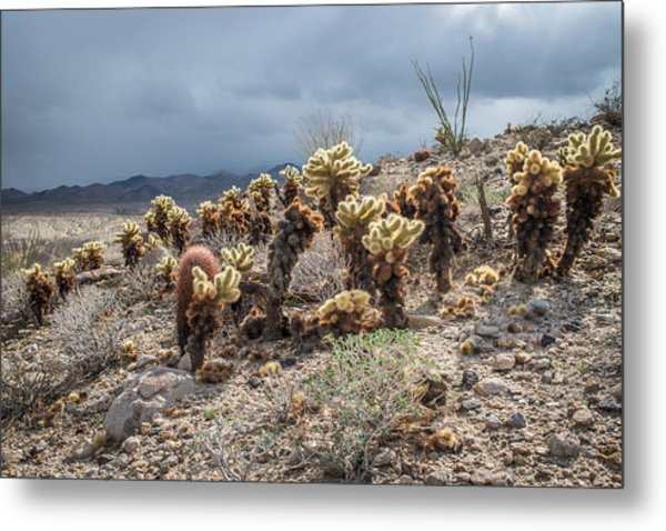Cholla Family With Guests Metal Print