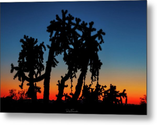 Metal Print featuring the photograph Cholla Silhouettes by Rick Furmanek